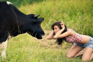 humor, Brunette, Model, Jean shorts, Shirt, Cows, Women outdoors, Kneeling, Field, Grass, Horns, Women, Animals, Nature, Plaid, Yana Anchugova, Sexy