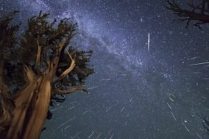 long exposure, Trees, Night, Space art, Space, Stars