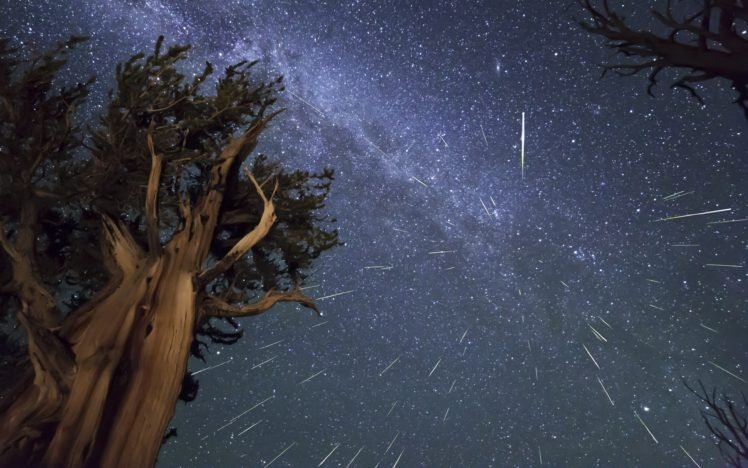long exposure, Trees, Night, Space art, Space, Stars HD Wallpaper Desktop Background