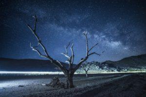 night, Universe, Trees