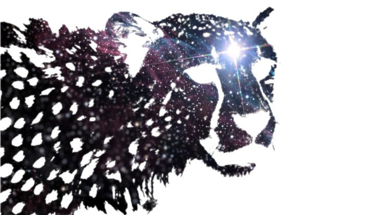 space, Animals, Cheetah HD Wallpaper Desktop Background