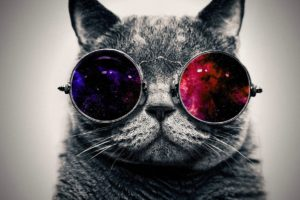 cat, Space art, Animals, Space