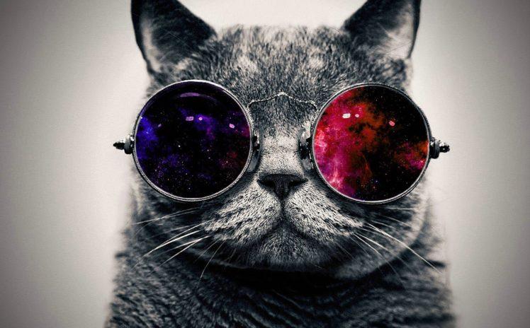 cat, Space art, Animals, Space HD Wallpaper Desktop Background