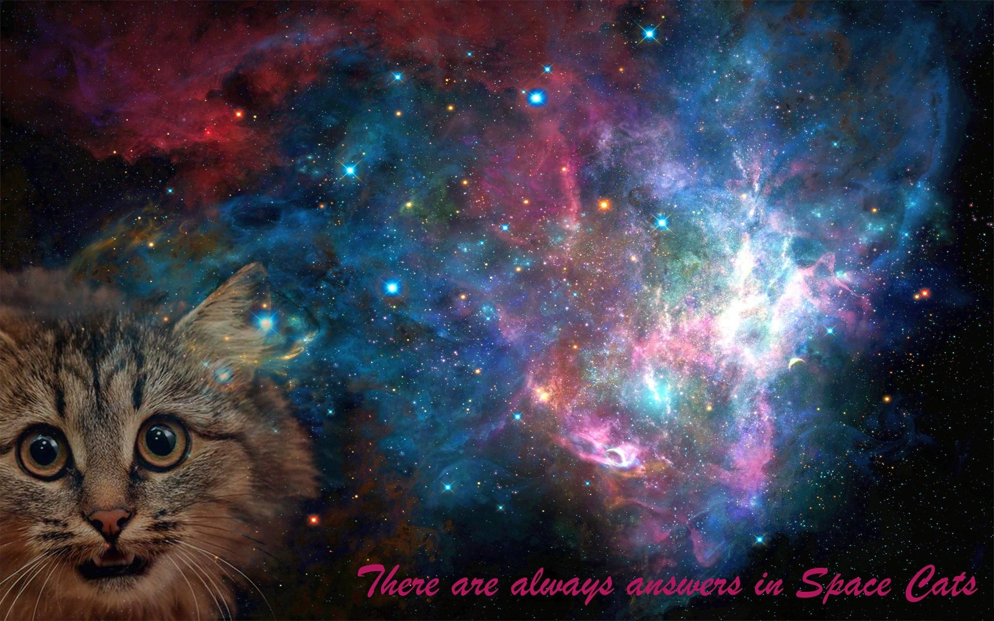 Download Samsung Galaxy Hd Wallpaper Gallery: Space, Cat, Space Cat, Galaxy HD Wallpapers / Desktop And