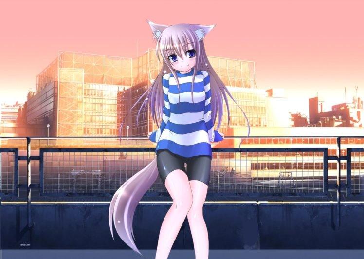 anime girls, Anime, Nekomimi, Animal ears, Original characters HD Wallpaper Desktop Background