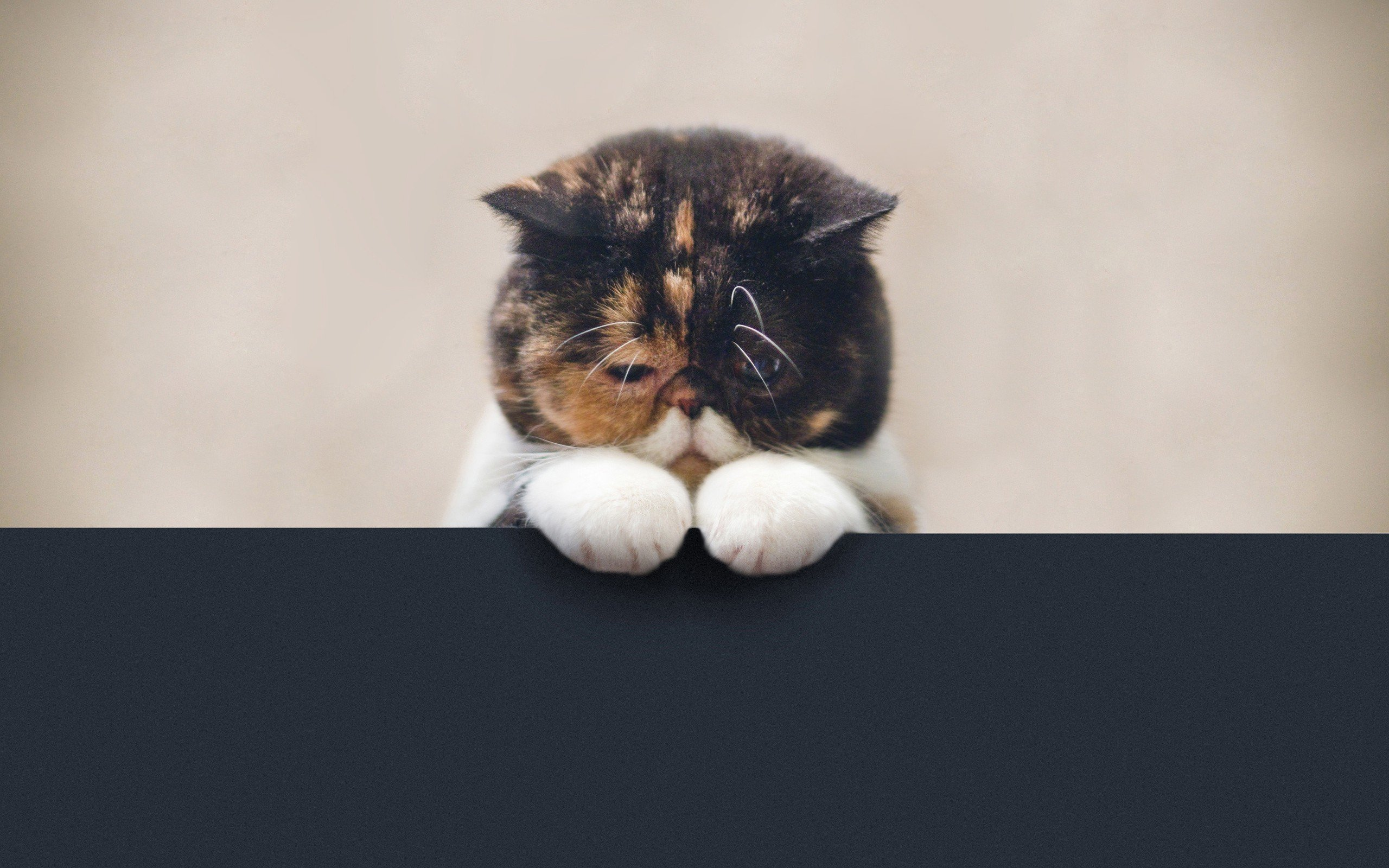 animals, Cat Wallpaper