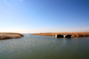 field, Water