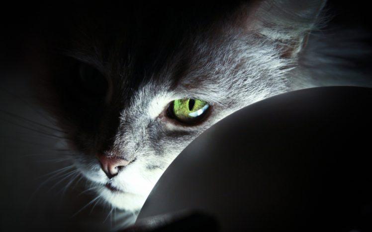 eyes, Green eyes, Cat, Animals HD Wallpaper Desktop Background