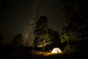 forest, Night, Stars, Night sky, Nature