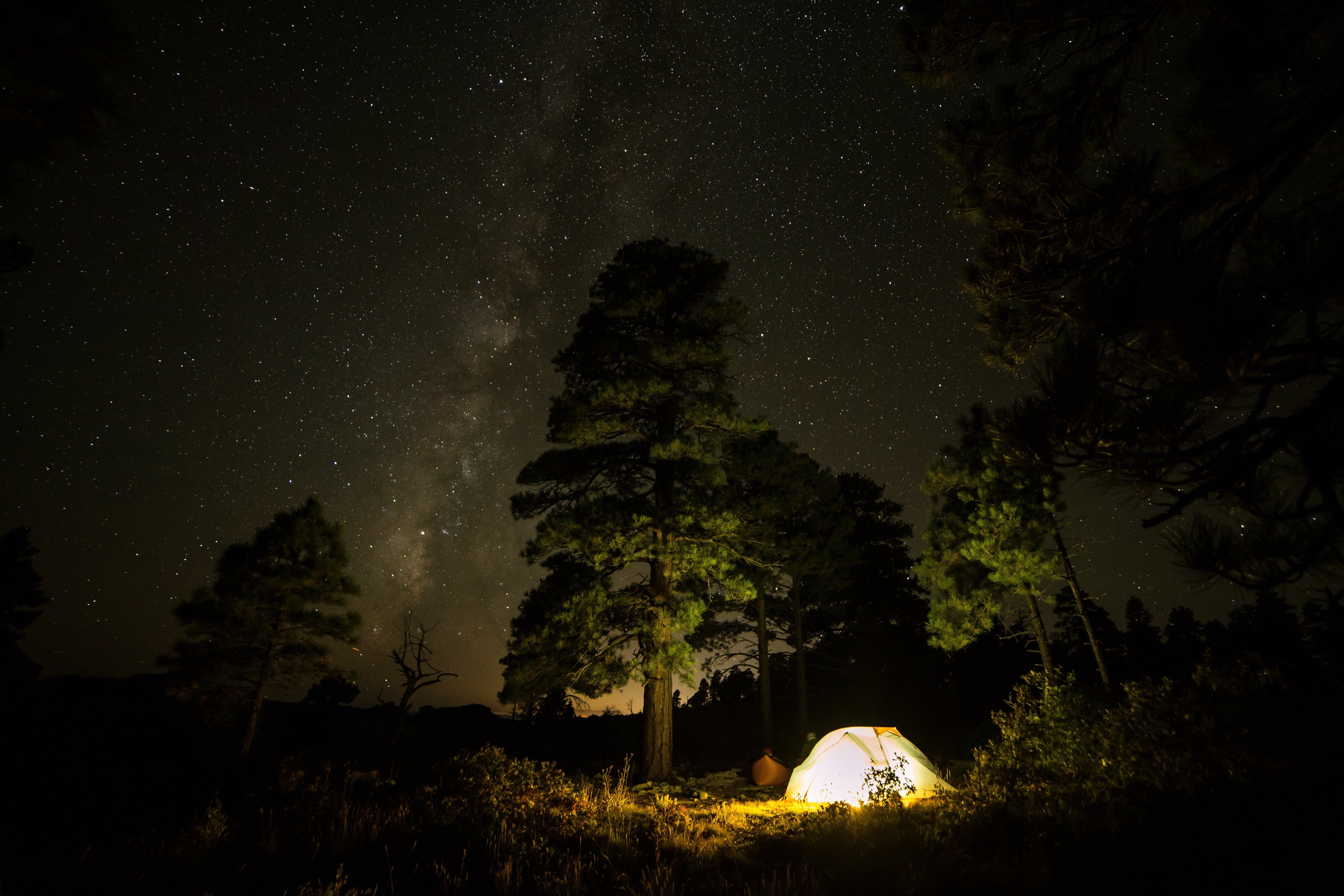 forest, Night, Stars, ...