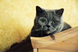 cat, Monocles