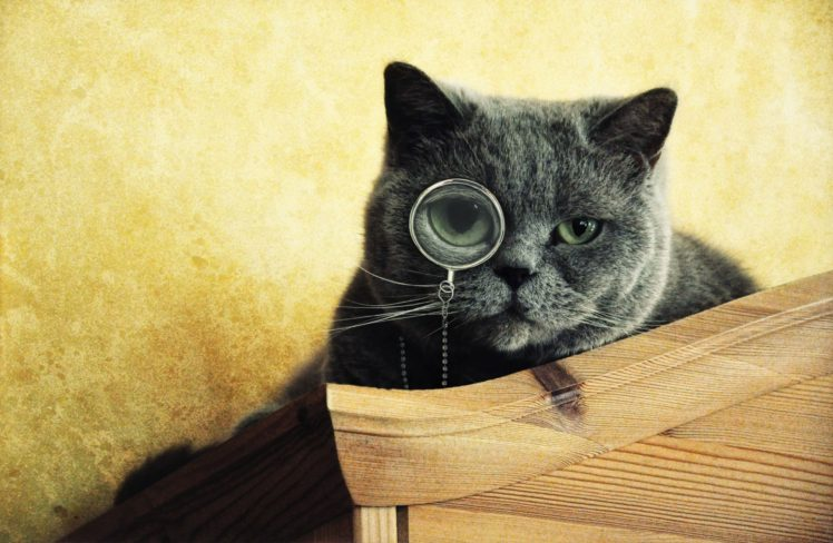 cat, Monocles HD Wallpaper Desktop Background