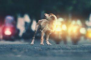 looking away, Dog, Road, Lights