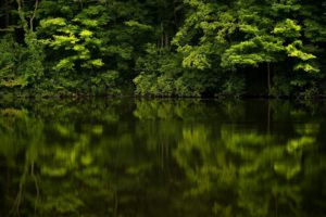 forest, Reflection, River, Plants, Landscape