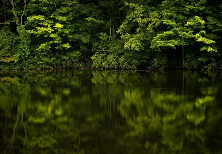 forest, Reflection, River, Plants, Landscape HD Wallpaper Desktop Background