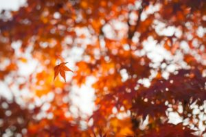 bokeh, Leaves, Depth of field, Fall