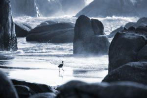 rocks, Sea, Alone