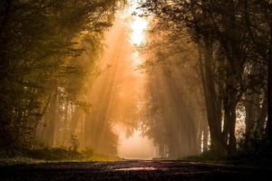 road, Forest, Plants, Sun rays, Mist, Nature, Trees