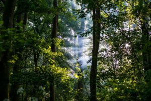 forest, Leaves, Sun rays, Trees, Nature