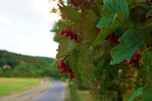 nature, Road