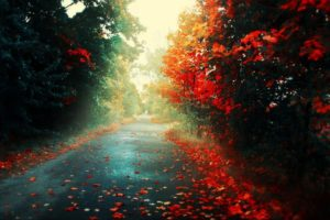 road, Fall, Fallen leaves, Trees