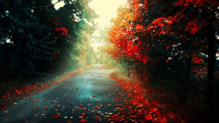 road, Fall, Fallen leaves, Trees HD Wallpaper Desktop Background