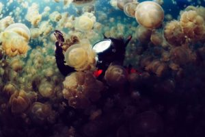 jellyfish, Underwater, Photography