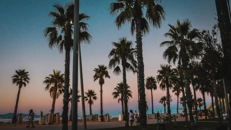 Palm trees HD Wallpapers / Desktop