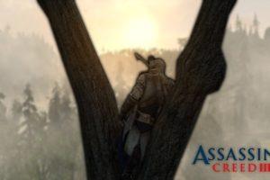 Assassin&039;s Creed, Pine trees, Sun rays
