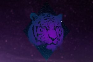 animals, Tiger, Galaxy