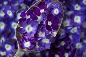 spoons, Flowers, Purple flowers, Macro