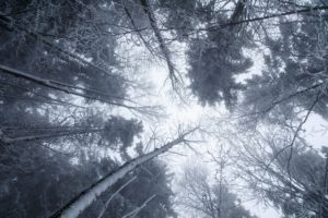 trees, Winter, Ice, Snow, Cold, Nature, Worm&039;s eye view