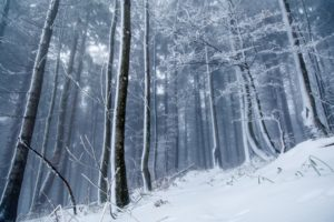winter, Ice, Snow, Forest, Nature, Trees