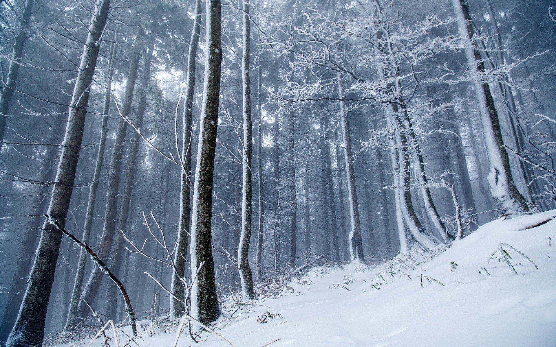 winter ice snow forest nature trees hd wallpapers