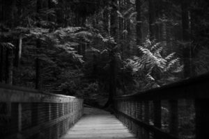 forest, Bridge, Trees, Monochrome
