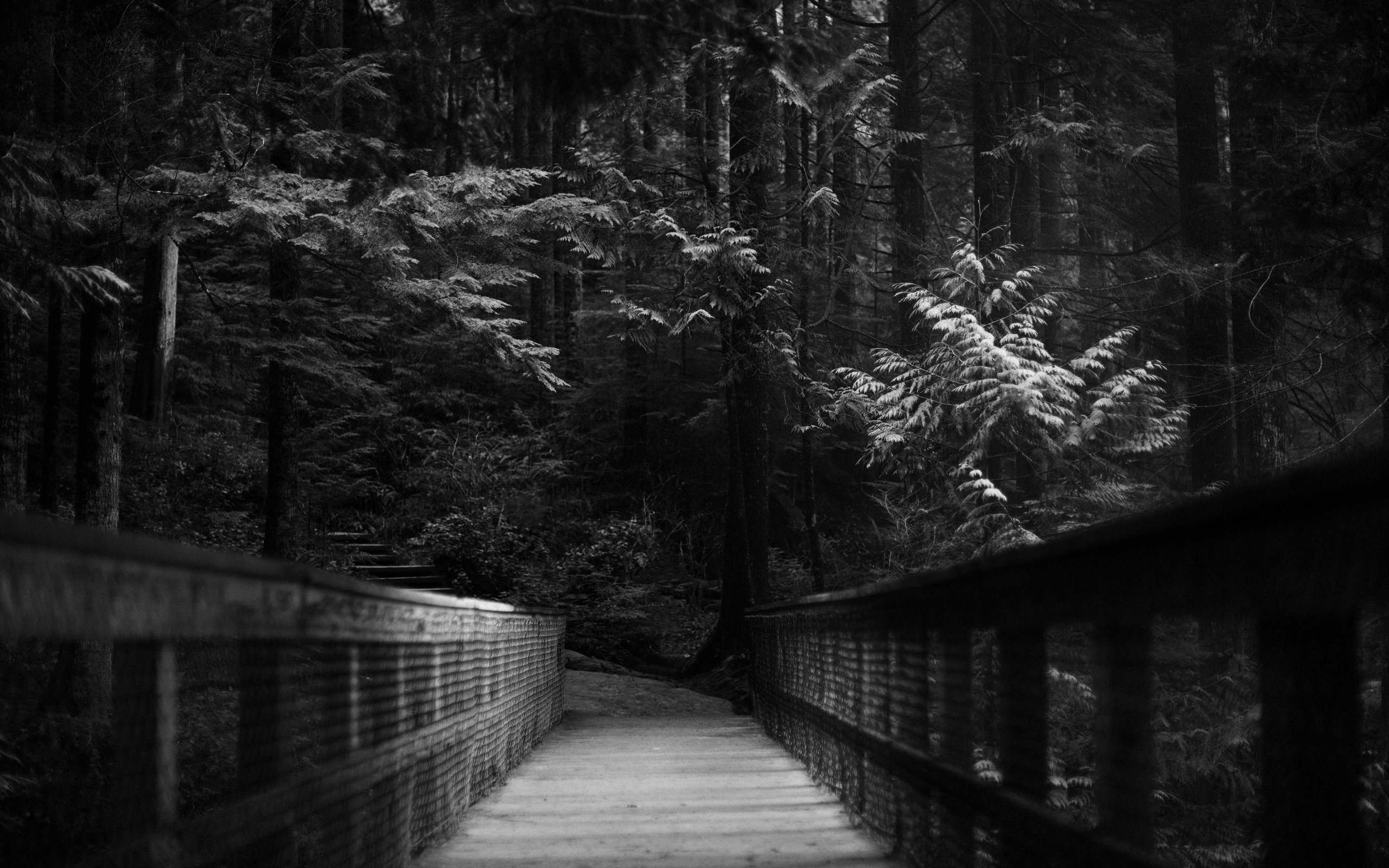 Dark Trees Hd Wallpapers: Forest, Bridge, Trees, Monochrome HD Wallpapers / Desktop
