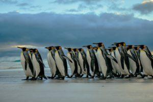 nature, Penguins, Birds, Beach