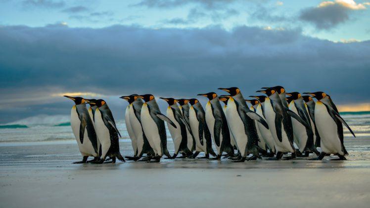 Nature Penguins Birds Beach Hd Wallpapers Desktop And