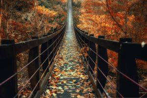 nature, Photography, Landscape, Fall, Bridge, Wooden surface, Leaves, Forest, Red, Trees, Taiwan
