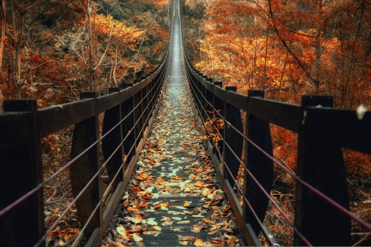 nature, Photography, Landscape, Fall, Bridge, Wooden surface, Leaves, Forest, Red, Trees, Taiwan HD Wallpaper Desktop Background