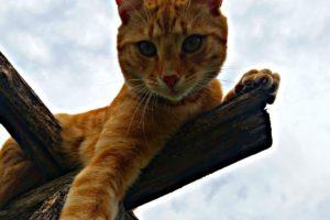 cat, Wildlife, Pet, Sky