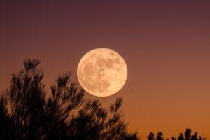 Moon, Trees, Sky