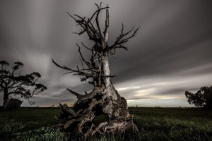 nature, Landscape, Trees, Dead trees, Field, Grass, Clouds, Long exposure, Evening