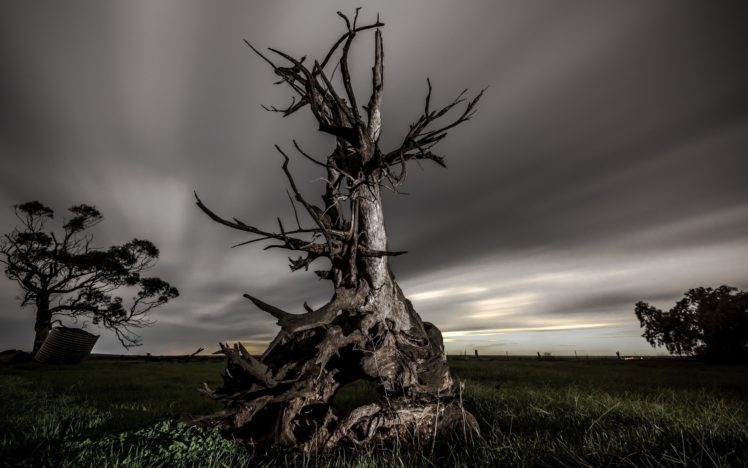 nature, Landscape, Trees, Dead trees, Field, Grass, Clouds, Long exposure, Evening HD Wallpaper Desktop Background