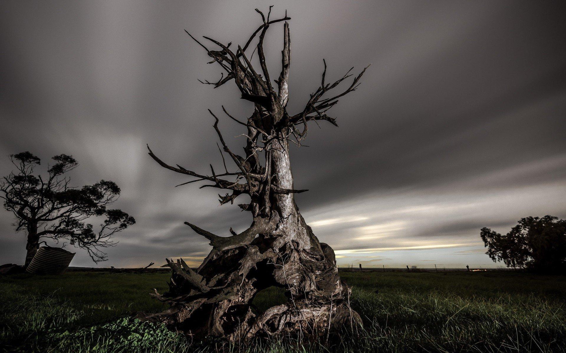 nature, Landscape, Trees, Dead trees, Field, Grass, Clouds, Long exposure, Evening Wallpaper