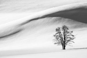 nature, Landscape, Trees, Winter, Snow, Hills, Monochrome, Shadow
