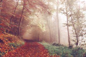 landscape, Forest