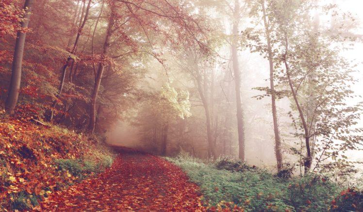 landscape, Forest HD Wallpaper Desktop Background
