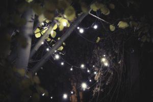 leaves, Garden, Aspen, Christmas lights, Lights, Fall, November