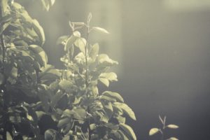 leaves, Trees, Sunset, Summer, June
